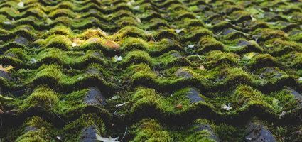 Nettoyage et démoussage des toitures – 34